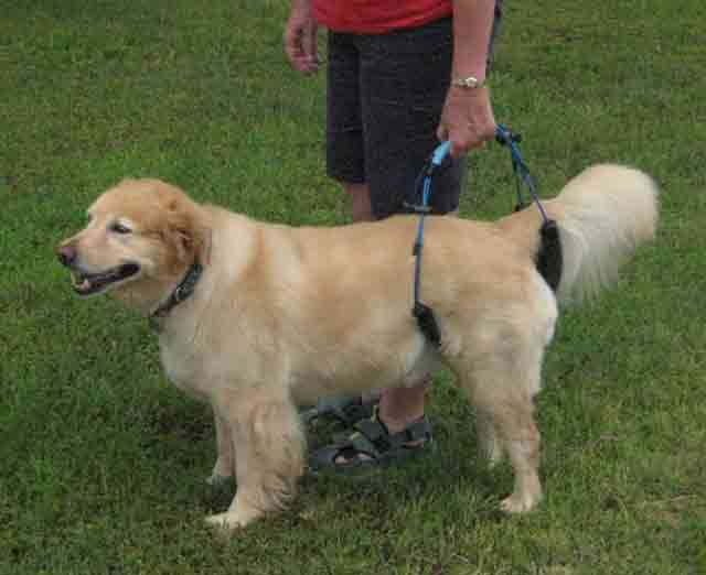 Dog in Handheld Harness