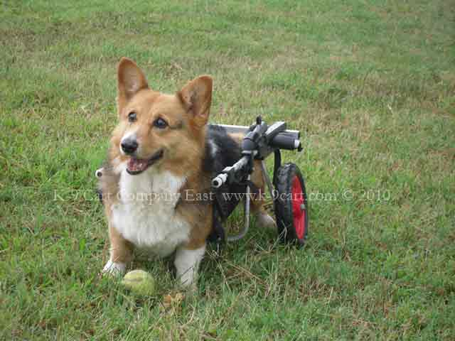 two wheel dog wheelchair