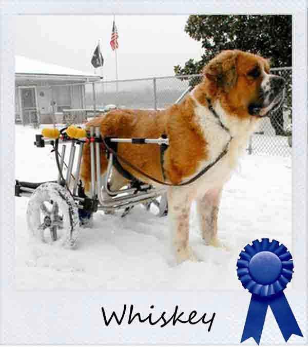 Whiskey wins photo contest