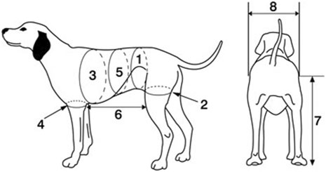 measuring your pet for a Walkabout Harness