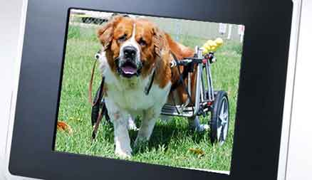K-9 Cart Dog Wheelchairs