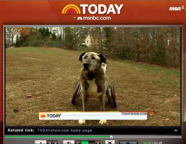 K-9 Cart Dog Wheelchair on Today Show